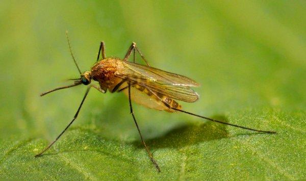 Эксперты назвали ТОП-5 растений, которые навсегда избавят от комаров