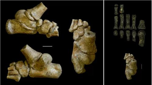 Ученые: Три миллиона лет назад дети предков людей лазали по деревьям