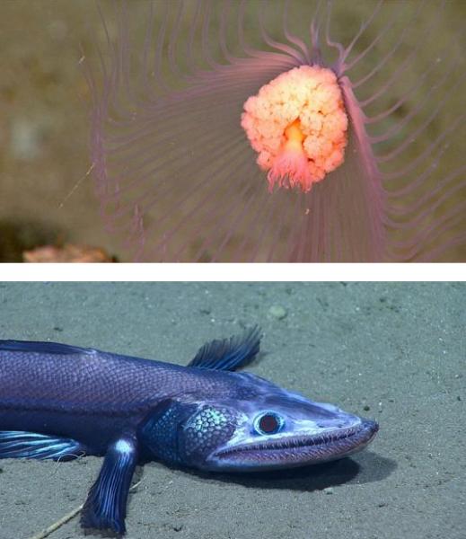 Ученые показали самых жутких неизвестных науке океанских рыб