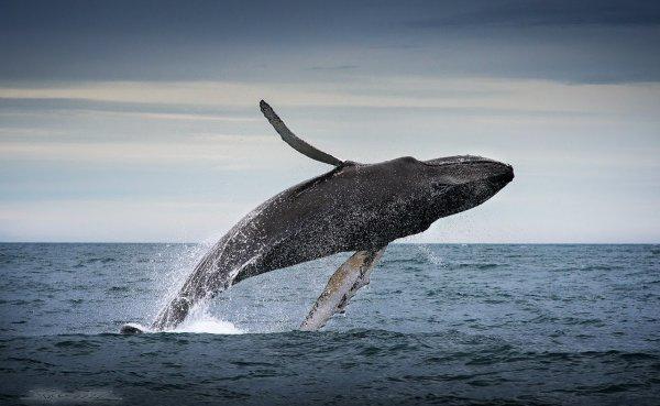 Ученые назвали причину исчезновения древних китов в Средиземном море