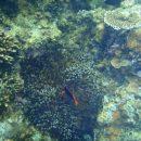 Коралловые рифы помогут ученым восстанавливать человеческие кости