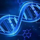 В Британии заявили о реальной допустимости менять ДНК человека