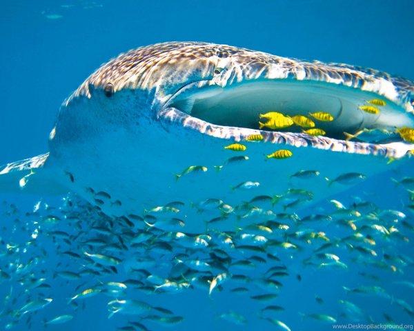 Ученые: Самцы акулы живут до 130 лет