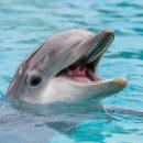 Ученые расшифровали язык дельфинов