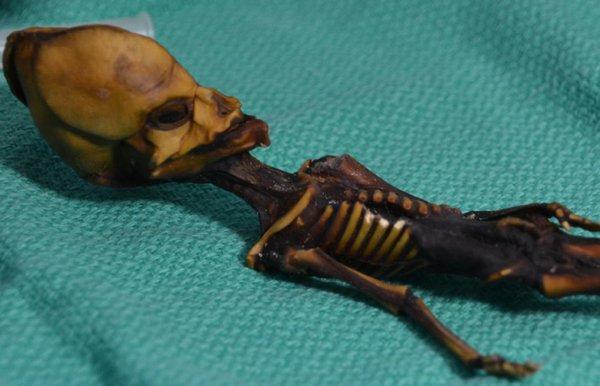 Ученые: 15-сантиметровый «гуманоид» из Чили был результатом выкидыша