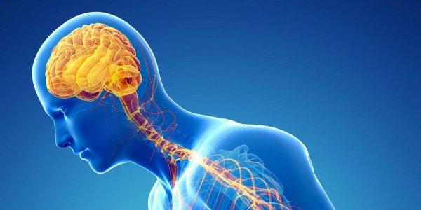Ученые сказали, какие виды спорта провоцируют болезнь Паркинсона