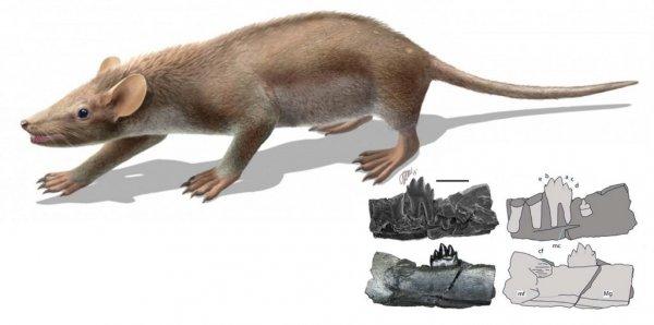 Ученые открыли в Якутии два новых вида древнейших млекопитающих