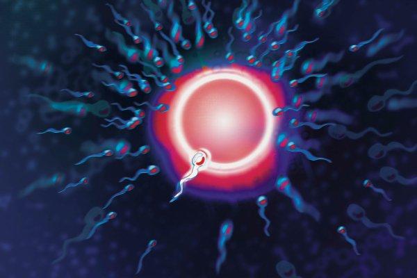Учёные нашли уникальную молекулу, помогающую сперматозоидам найти яйцеклетку