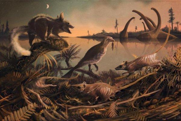 В Якутии археологи раскопали останки новых древнейших млекопитающих