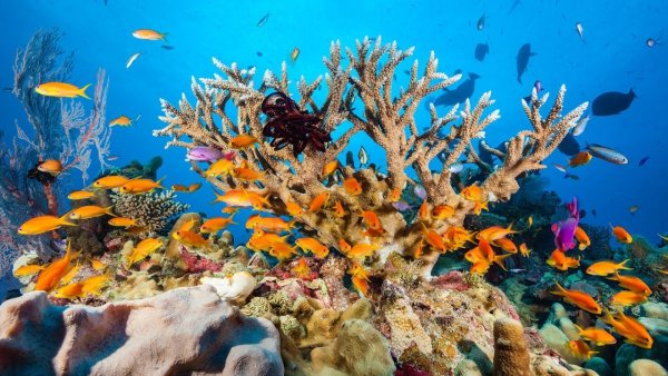 Биологи доказали, что кораллы являются родственниками динозавров