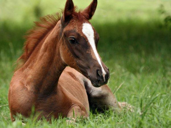 В Якутии ученые обнаружили замороженного жеребенка древней лошади