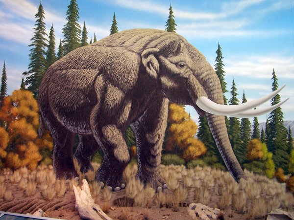 В США обнаружили фрагмент кости доисторического большого животного