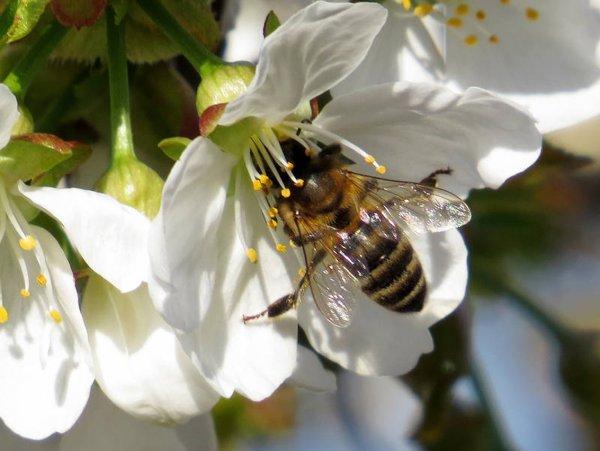 Ученые: Осы и пчелы идентифицируют людей по лицу