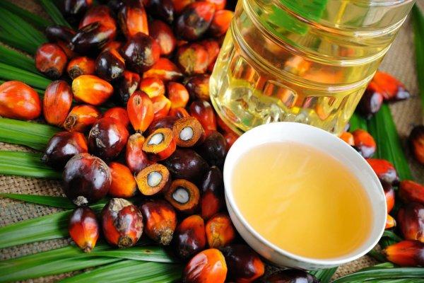 Африканские приматы в опасности из-за пальмового масла