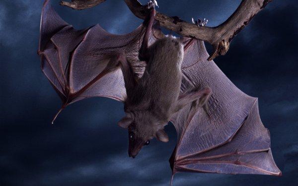 Ученые предостерегают: Летучие мыши разносят новый опасный вирус Эбола