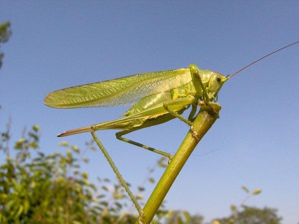 Глобальное потепление поспособствует появлению армии насекомых-вредителей