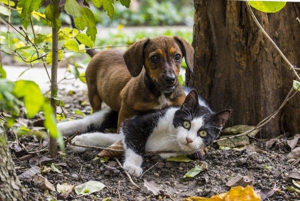Ученые объяснили, почему собаки пьют воду неряшливо, а кошки аккуратно