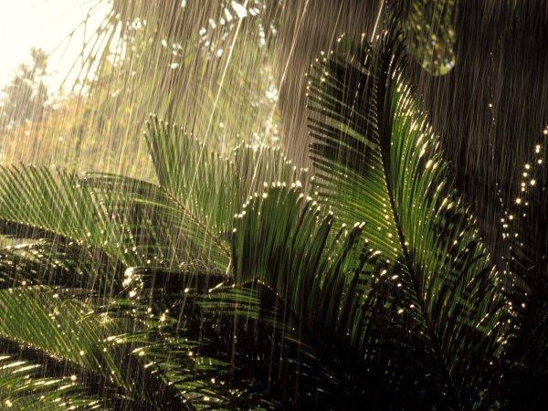 Древнее глобальное потепление стало причиной дождей и наводнений