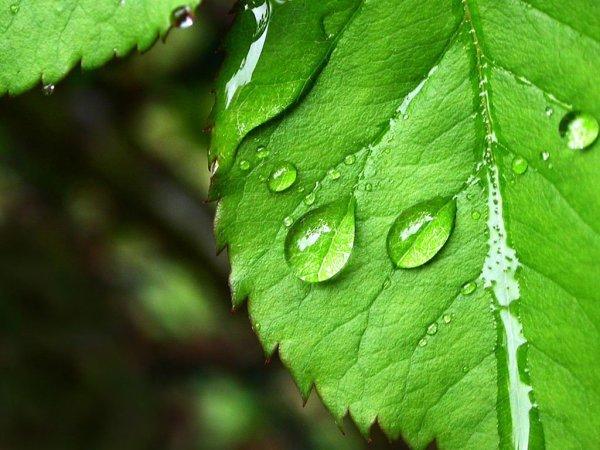 Учёные обнаружили способность растений передавать сигналы друг другу