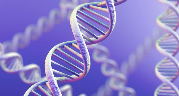 Человеческих генов оказалось в несколько раз больше, чем учёные считали раннее