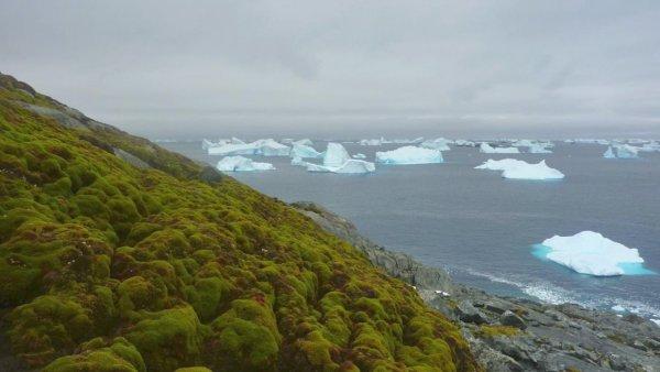 Ученые: Мхи в Антарктиде засохли из-за смены климата