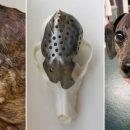В Канаде на 3D-принтере напечатали череп для собаки