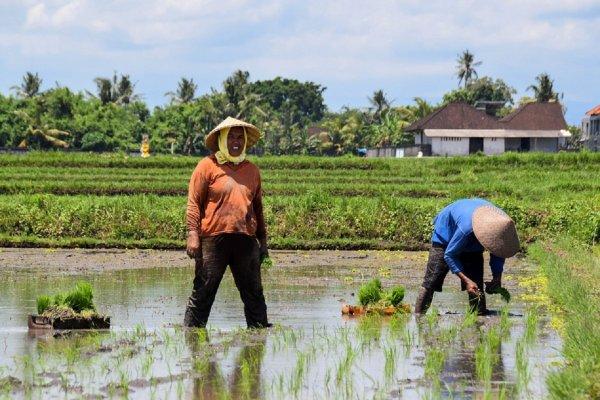 Ученые: Орошение сельхоз культур сточными водами приводит к болезням людей