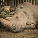 Крысы вместо носорогов: Ученые предрекли исчезновение крупных млекопитающих к концу XXI века