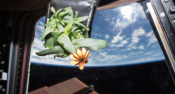 Учёные стали на шаг ближе к колонизации других планет