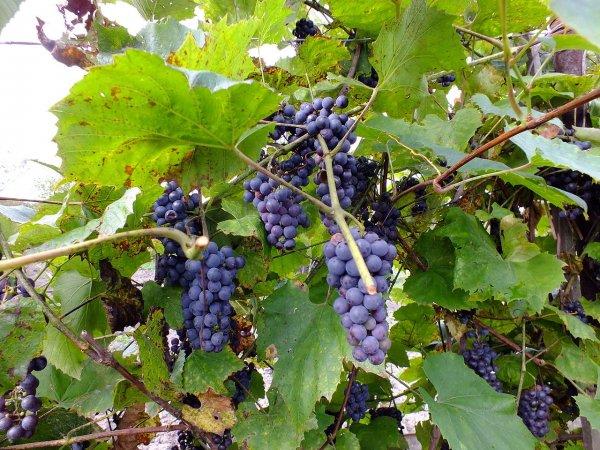Ученые нашли фрукт, препятствующий появлению кариеса