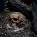 Пол древних скелетов может быть определен по одному зубу — Ученые