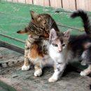 Ученые раскрыли секрет ухоженности кошек