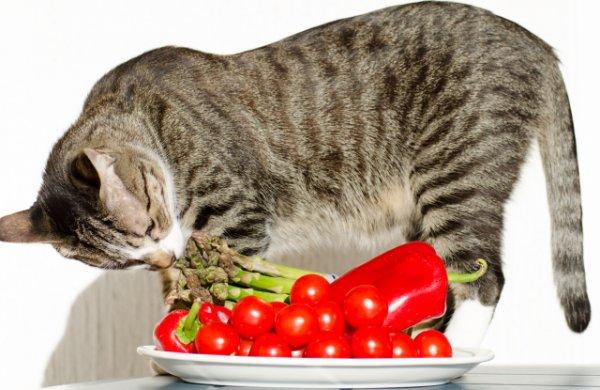 Учёные предупредили, что кошки-вегетарианцы чаще болеют
