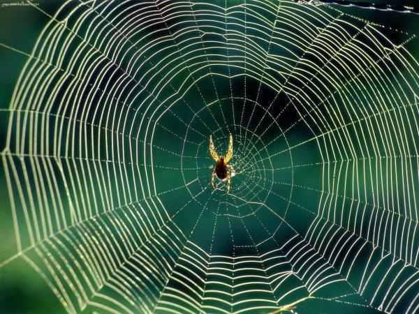 Археолог продемонстрировал паука с «головой собаки»
