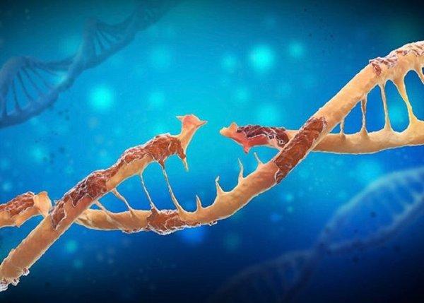 Ученые: Асимметричность нитей ДНК приводит к росту числа мутаций