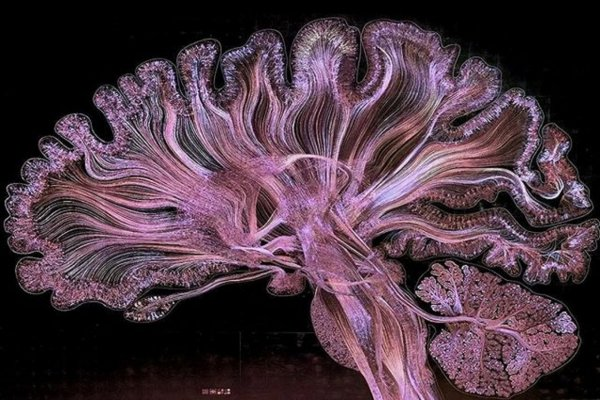 Ученые создали изображение мозга путем ручного рисования