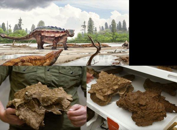 Учеными обнаружен новый вид динозавра-броненосца