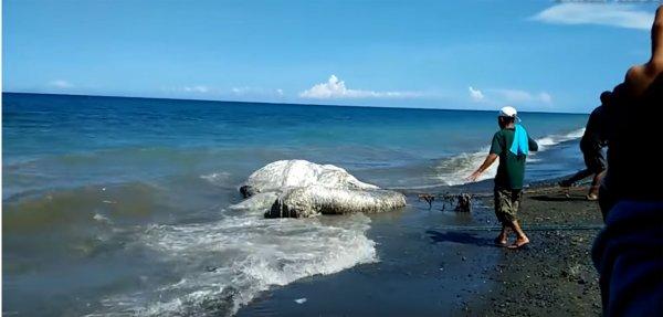 Топ-5 морских чудовищ 2018 года напугал даже самых смелых