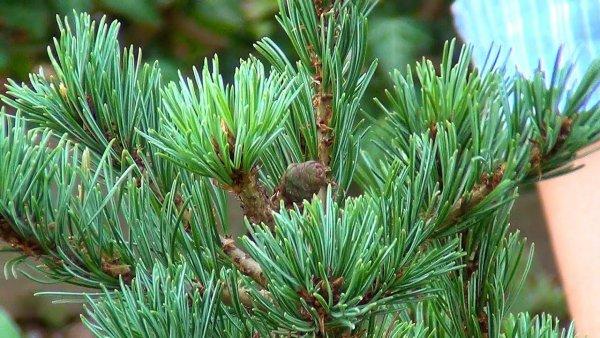 Ученые рассказали, как можно использовать срубленные елки после праздников