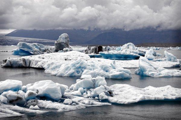 Учёные назвали животных, которые вымрут в Антарктиде от глобального потепления