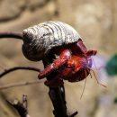 Ученые: У раков-отшельников пенис вырастает размером до 60% от длины их тела