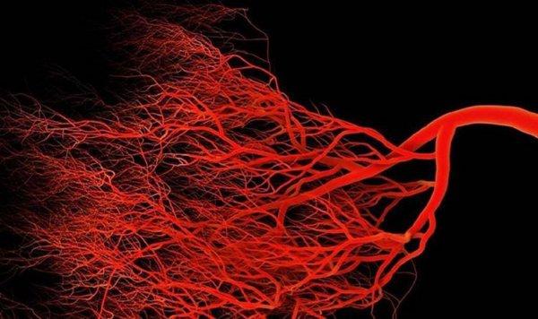 Канадские ученые вырастили кровеносные сосуды в лаборатории