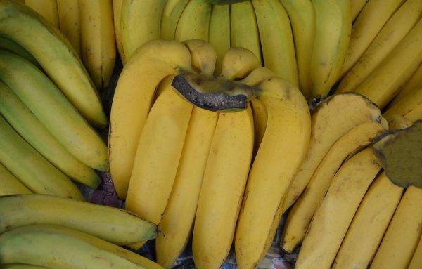 Ученые нашли спасение для африканских бананов