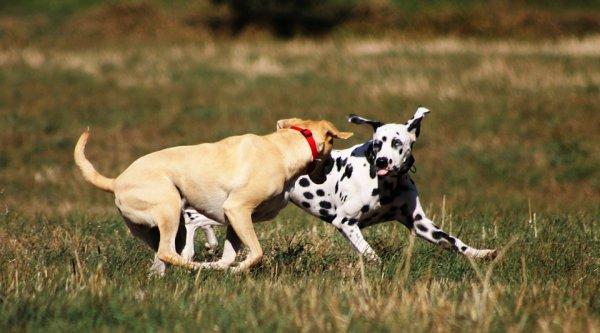 Испанские археологи раскопали массовые захоронения собак