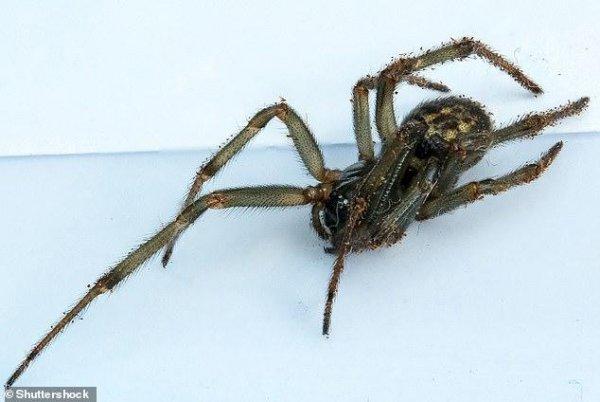 Ученые: Мир в опасности от ядовитых пауков, убивающих живых существ