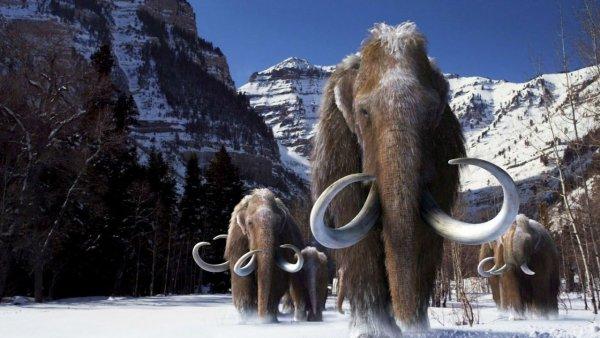 Зачем воскрешать мамонта?: Учёные могут возродить древних животных для создания мамонтовой фермы