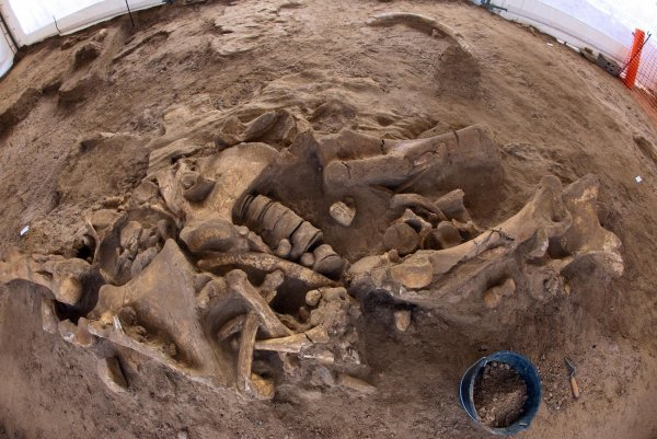 Найдено место захоронения динозавров погибших  в результате падания астероида