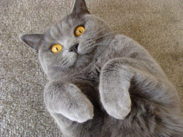 Всё дело в хитрости: Учёные выяснили, почему коты отзываются на свои имена