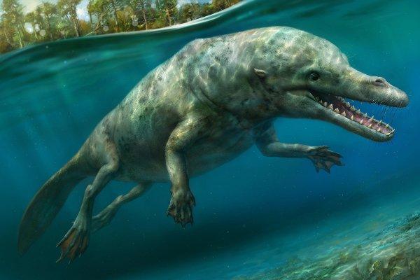 «Древний Крокодилоид с Нибиру»: Учёные нашли свидетельства инопланетного происхождения жизни на Земле — уфолог