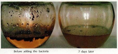 «Ударит по больному месту»: Нибиру лишит россиян бензина с помощью бактерий